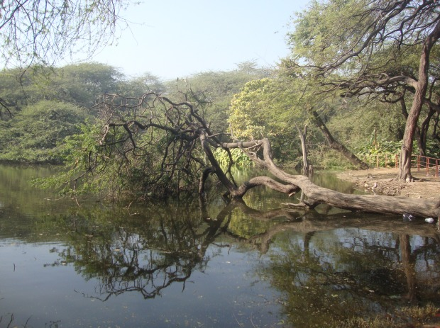 wetland-inside-north-delhi-ridge